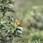 und ganz viele Schmetterlinge, die sich allerdings nur ungern fotografieren lassen wollten