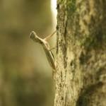 sie flog von Baum zu Baum