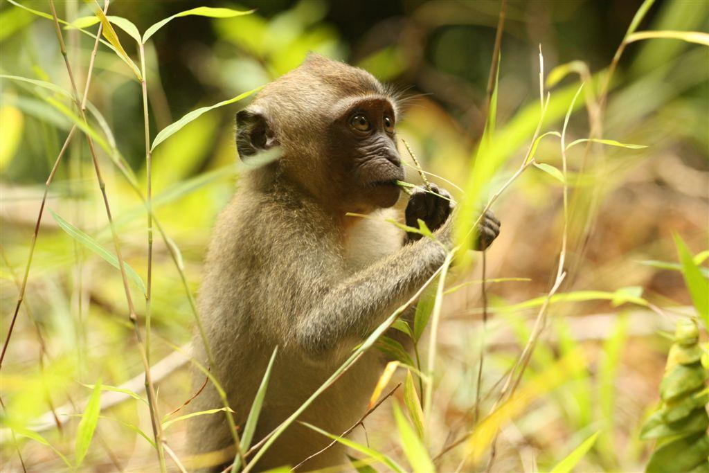 Begegnungen hautnah – Khao Sok National Park