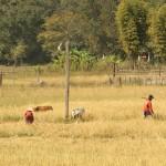 Bauern beim Arbeiten