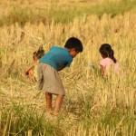 auch viele Kinder spielen in den Feldern