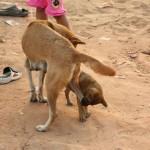 Hundewelpen spielt mit der Mutter