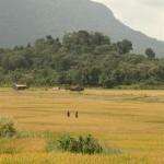 Bauern im Feld