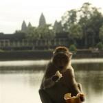Affe mit gestohlenem Brot