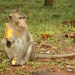 Affen und Besucher hatten ihren Spaß