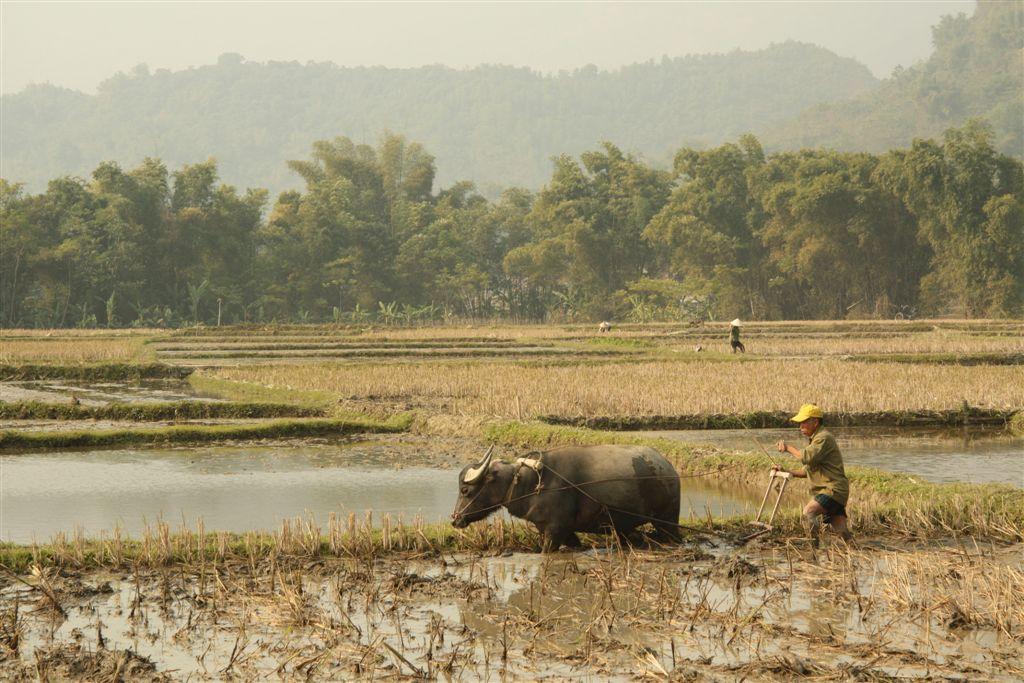 Die Reisterrassen von Mai Chau