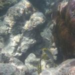 Unterwasserwelt - Kalapathar Beach