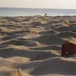 Beach No. 7 (Radhanagar Beach)