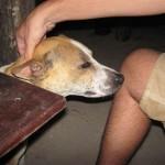 dankbarer Hundefreund