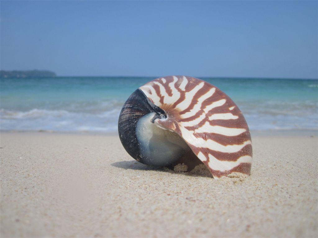 Tango Beach Resort – Neil Island