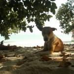 Hundefreund - Beach No. 5